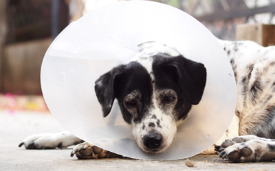 Top 5 Reasons To Consider Spaying & Neutering Your Pets