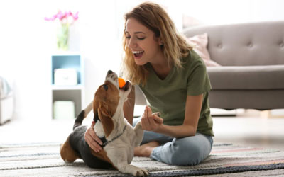 Tips To Encourage Positive Behavior Of Your Dogs